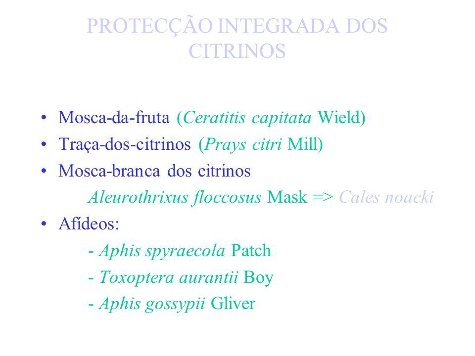 PREDADORES E PARASITAS DOS CITRINOS - C. dictyospermi - Aphitis chrysomphali Mercet par - Aspidiotiphagus lounsburyi Bel. par - Chilocorus bipustulatu