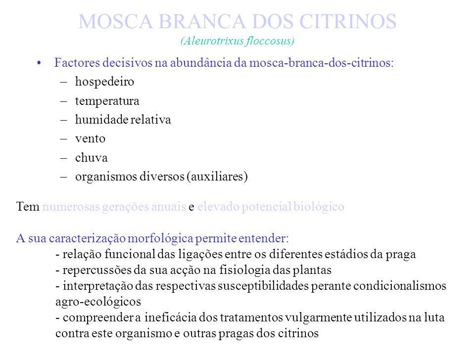 MOSCA BRANCA DOS CITRINOS (Aleurotrixus floccosus) Poseima Madeira - Comissão Fitossanitária Permanente das Comunidades Europeias - 1993/98 Programa d