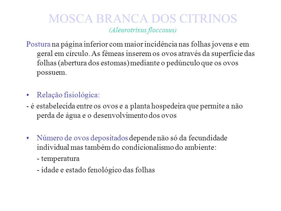 MOSCA BRANCA DOS CITRINOS (Aleurotrixus floccosus) Relações fenológicas: - ritmos de rebentação anual (folhas jovens e tenras) têm profunda influência