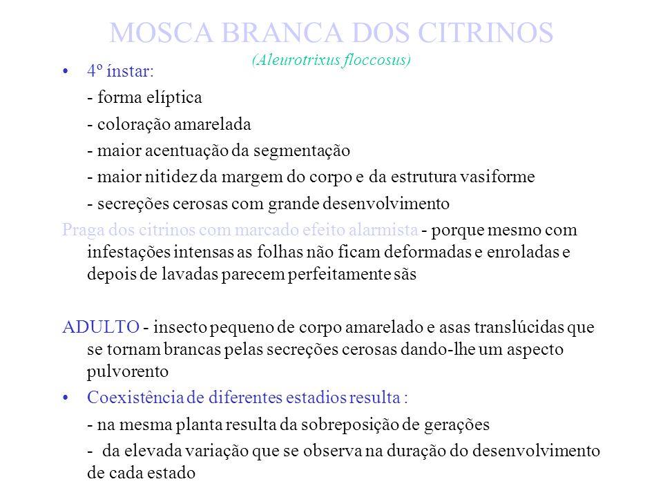 MOSCA BRANCA DOS CITRINOS (Aleurotrixus floccosus) Melada - associada à secreção de substâncias cerosas produzidas pela alimentação das ninfas do 1º í