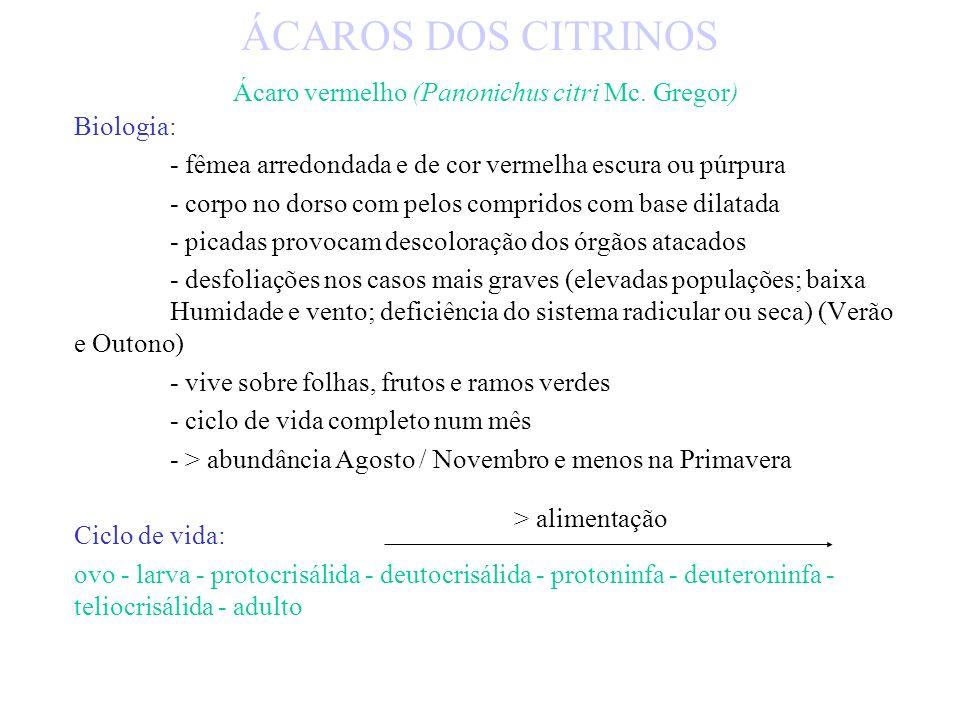 ÁCAROS: - FITÓFAGOS - PREDADORES - SAPRÓFAGOS / INFIFERENTES TETRANIQUÍDEOS - ácaros vermelho dos citrinos (Panonichus citri Mc.Gregor) - aranhiço ver