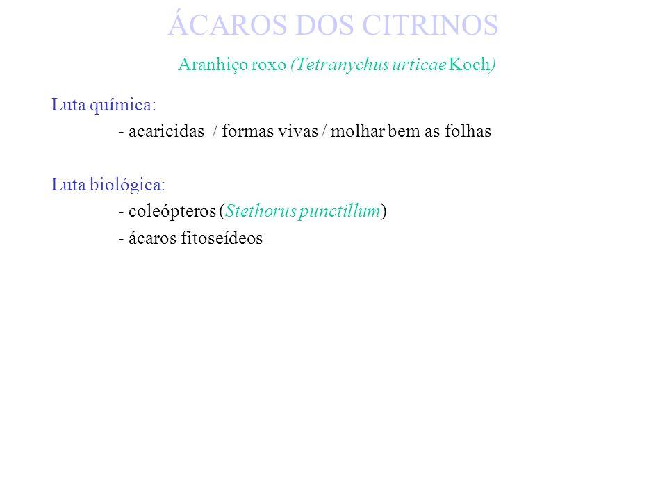 Biologia: - polífago de ar livre e estufa/ herbáceas e lenhosas (Clementinas e limoeiro) - colónias desenvolvem-se na página inferior - coloração amar