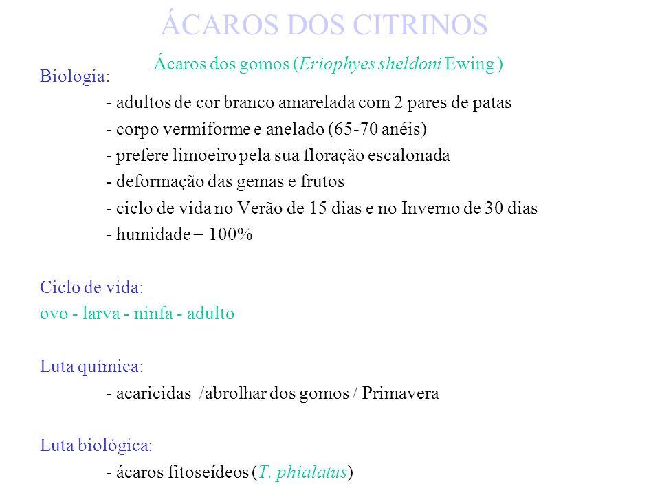 Luta química: - acaricidas / formas vivas / molhar bem as folhas Luta biológica: - coleópteros (Stethorus punctillum) - ácaros fitoseídeos ÁCAROS DOS