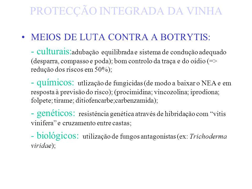 Nocividade da Botrytis: Uva para vinho - afectação da qualidade do vinho: - fermentação difícil; - maceração carbónica (perda de aroma e côr); - aumen