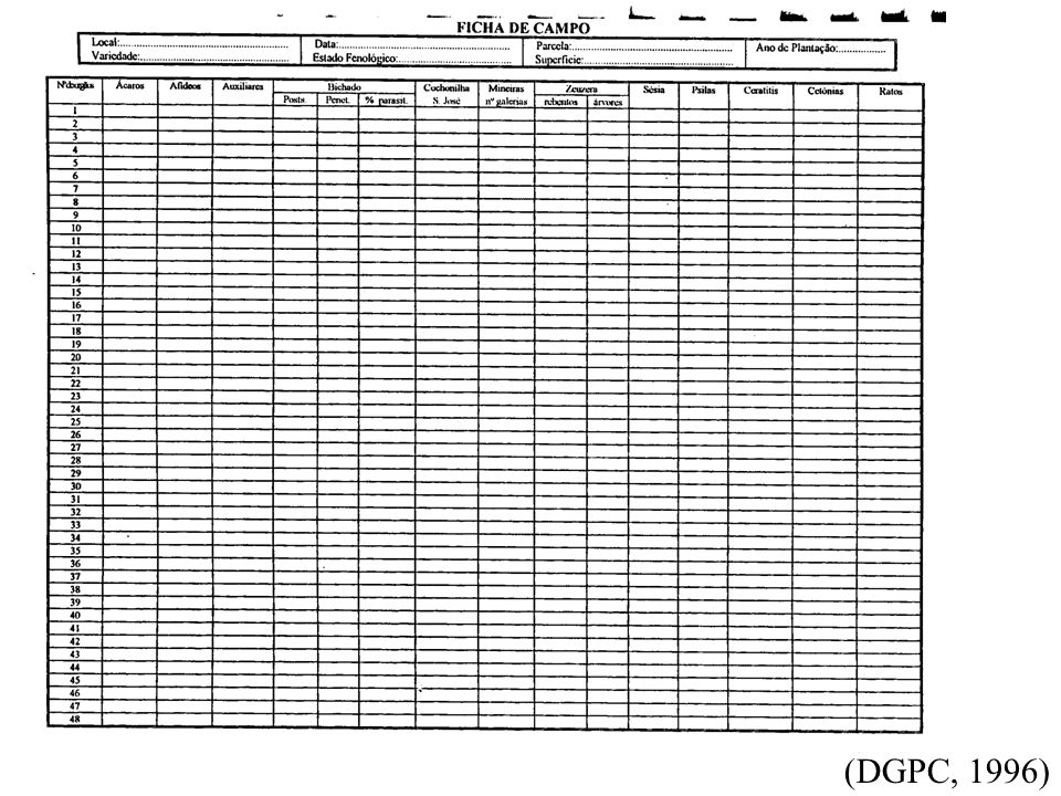 CITRINOS - ESTIMATIVA DO RISCO - Mineira dos citrinos (Phyllocnistis citrella Staiton) Evolução das populações- placas cromotrópicas / curva de voo unidade de amostragem=>2 placas/pomar (na direcção dos ventos dominantes) Estudo do ciclo biológico - início de rebentação com marcação de rebentos com 1 cm de comprimento e observação visual semanal com marcação do encontrado (nº de ovos, larvas, pupas) unidade de amostragem=>20 rebentos (5 rebentos x 4 orientações) Determinação do grau de ataque e evolução ao longo do tempo- rebentos medidos desde a 1ª folha até à gema apical, com avaliação de estragos semanal provocados pela mineira (tabela) unidade de amostragem=>20 rebentos (5 rebentos x 4 orientações)