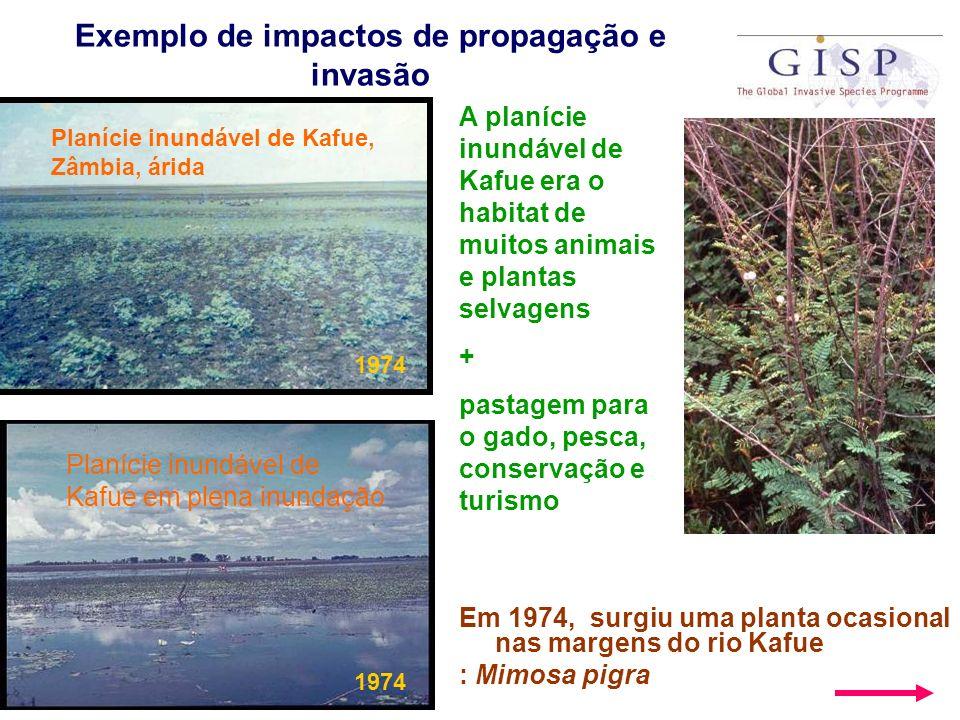 Exemplo de impactos de propagação e invasão Em 1974, surgiu uma planta ocasional nas margens do rio Kafue : Mimosa pigra Planície inundável de Kafue,