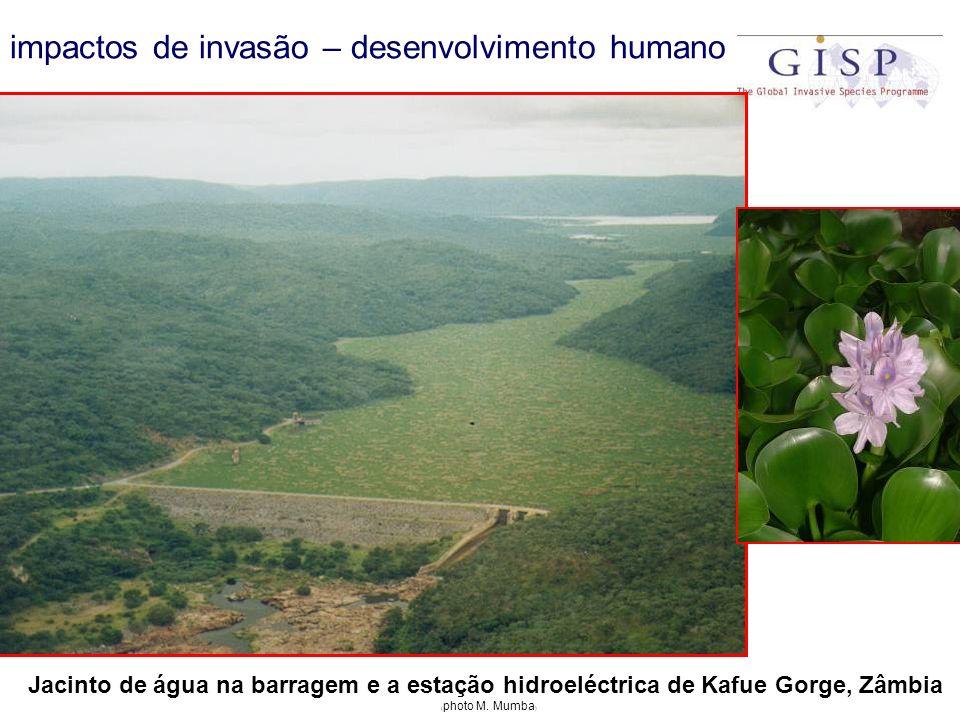 impactos de invasão – desenvolvimento humano Jacinto de água na barragem e a estação hidroeléctrica de Kafue Gorge, Zâmbia ( photo M. Mumba )