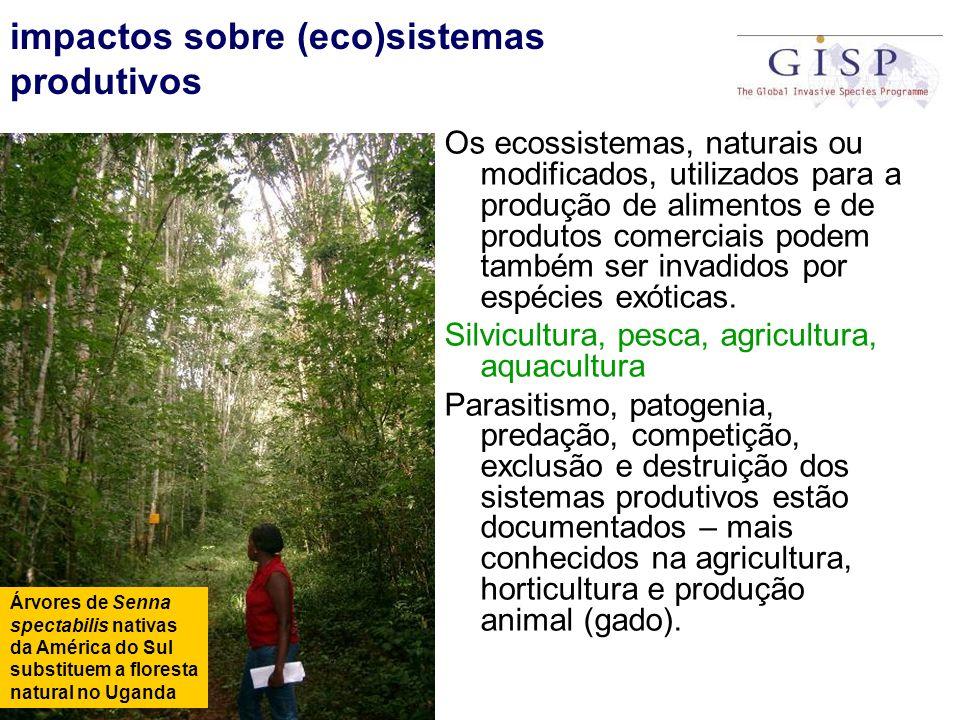 impactos sobre (eco)sistemas produtivos Os ecossistemas, naturais ou modificados, utilizados para a produção de alimentos e de produtos comerciais pod