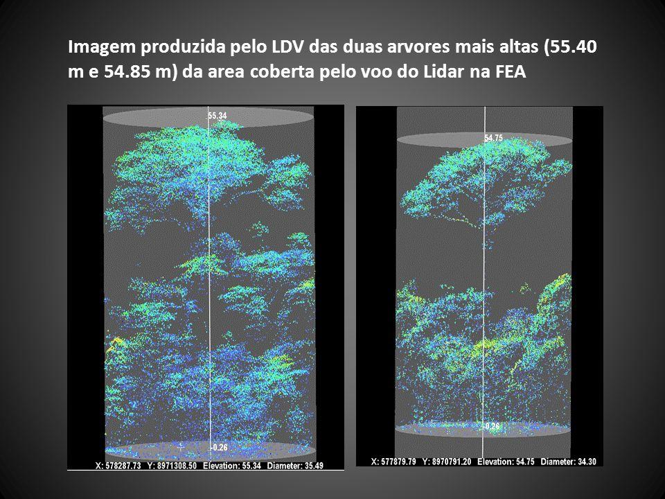 Imagem produzida pelo LDV das duas arvores mais altas (55.40 m e 54.85 m) da area coberta pelo voo do Lidar na FEA