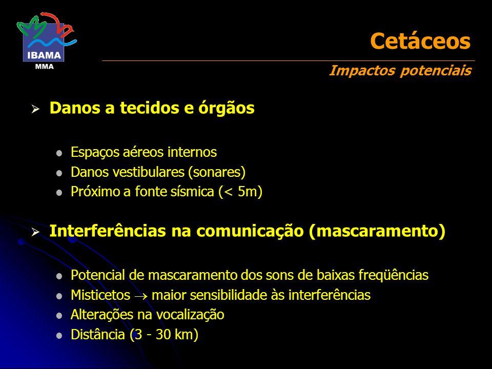 Cetáceos Impactos potenciais Danos a tecidos e órgãos Espaços aéreos internos Danos vestibulares (sonares) Próximo a fonte sísmica (< 5m) Interferênci