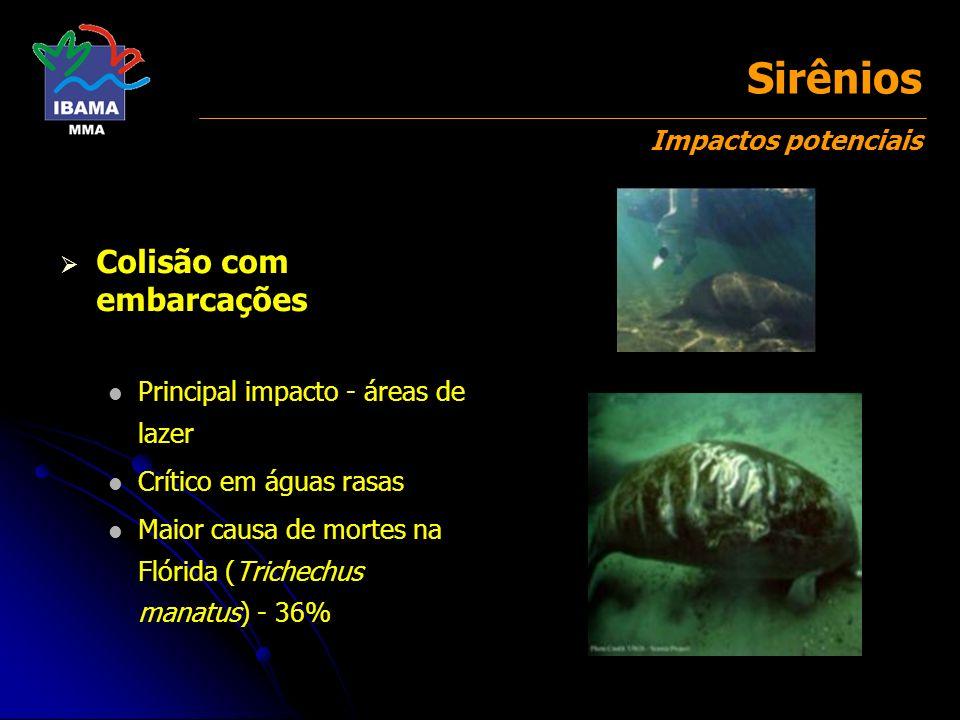 Colisão com embarcações Principal impacto - áreas de lazer Crítico em águas rasas Maior causa de mortes na Flórida (Trichechus manatus) - 36%