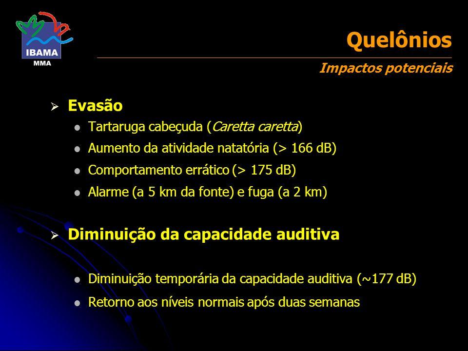 Evasão Tartaruga cabeçuda (Caretta caretta) Aumento da atividade natatória (> 166 dB) Comportamento errático (> 175 dB) Alarme (a 5 km da fonte) e fug