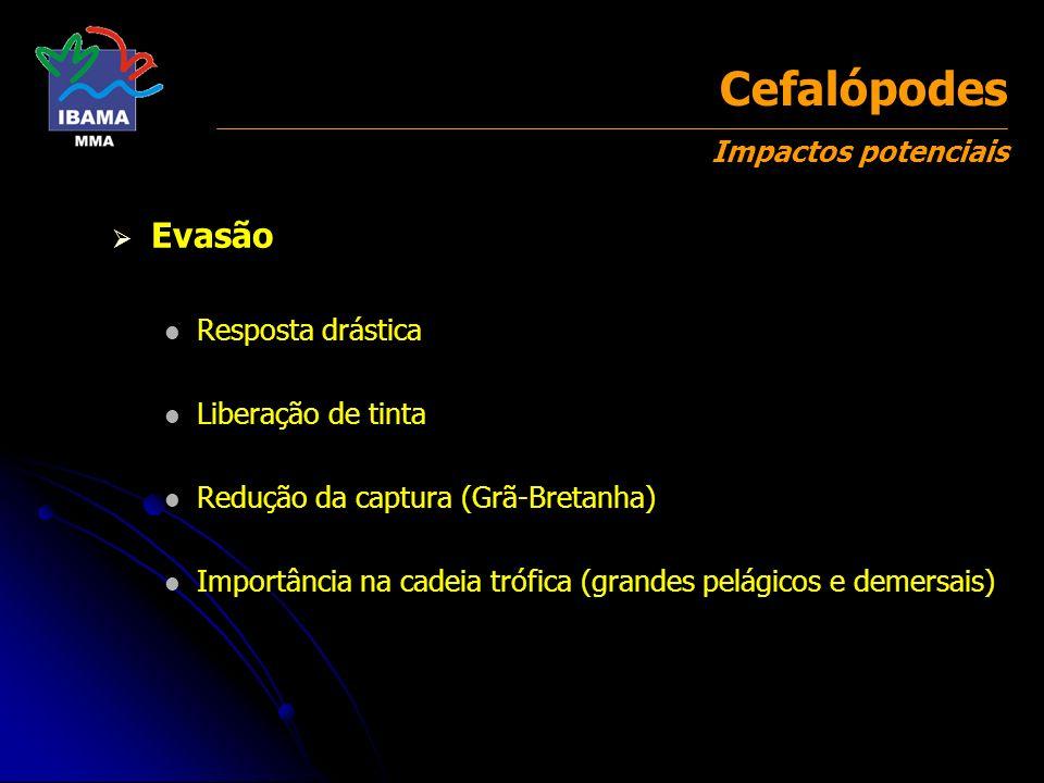 Evasão Resposta drástica Liberação de tinta Redução da captura (Grã-Bretanha) Importância na cadeia trófica (grandes pelágicos e demersais) Cefalópode
