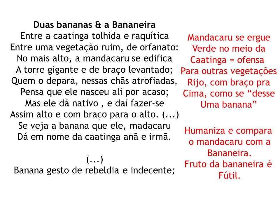 Duas bananas & a Bananeira Entre a caatinga tolhida e raquítica Entre uma vegetação ruim, de orfanato: No mais alto, a mandacaru se edifica A torre gi