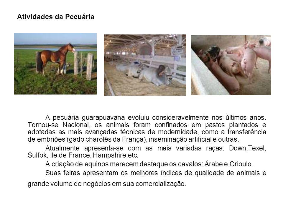 Atividades da Pecuária A pecuária guarapuavana evoluiu consideravelmente nos últimos anos.