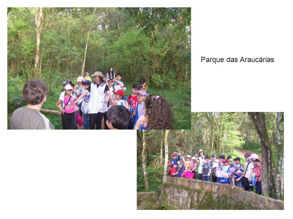 Parque das Araucárias