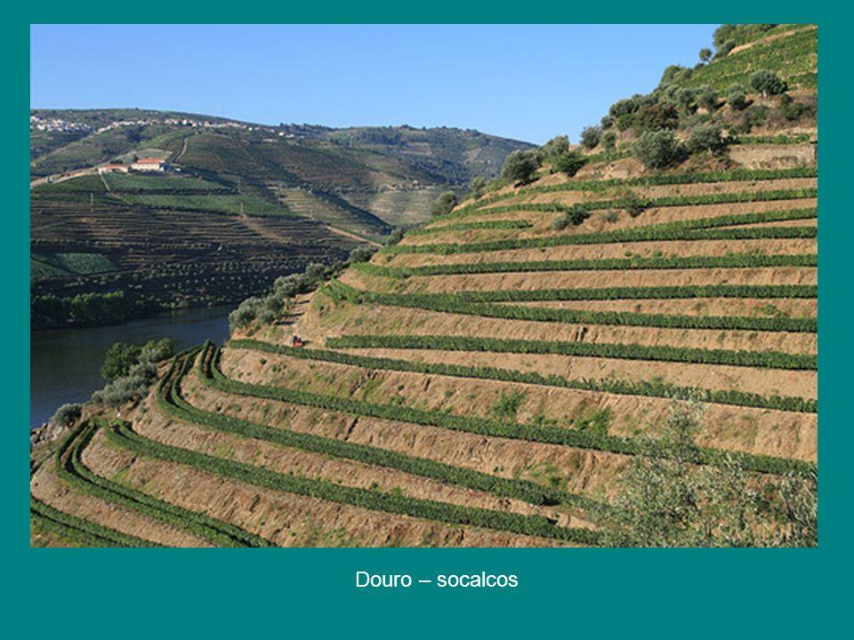 Douro - a vinha em socalcos. Entre cada duas fileiras espaço para a máquina agrícola (como é duro trabalhar aqui nestas encostas)