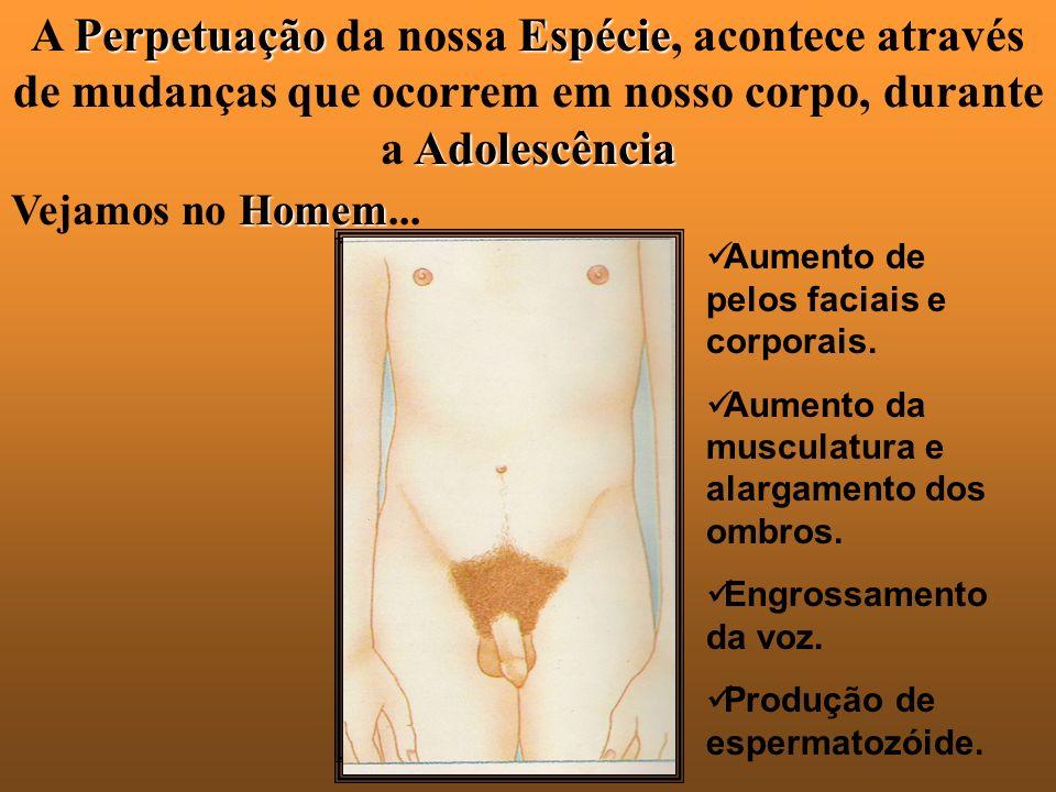 A P PP Perpetuação da nossa E EE Espécie, acontece através de mudanças que ocorrem em nosso corpo, durante a A AA Adolescência Vejamos no H HH Homem...