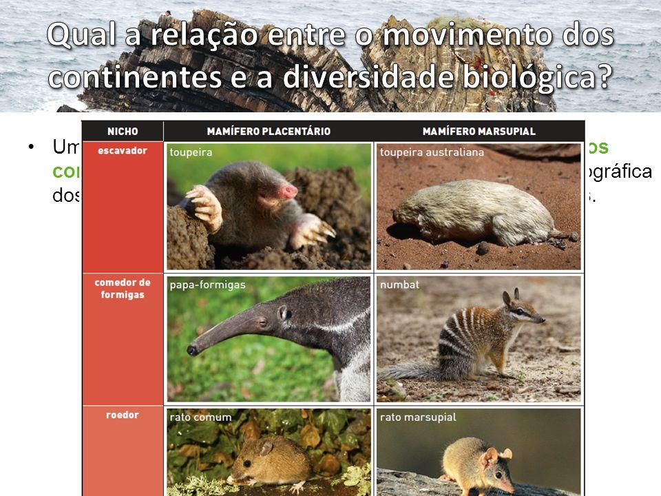 Um dos exemplos da estreita relação entre o movimento dos continentes e a diversidade biológica é a distribuição geográfica dos mamíferos marsupiais e dos mamíferos placentários.