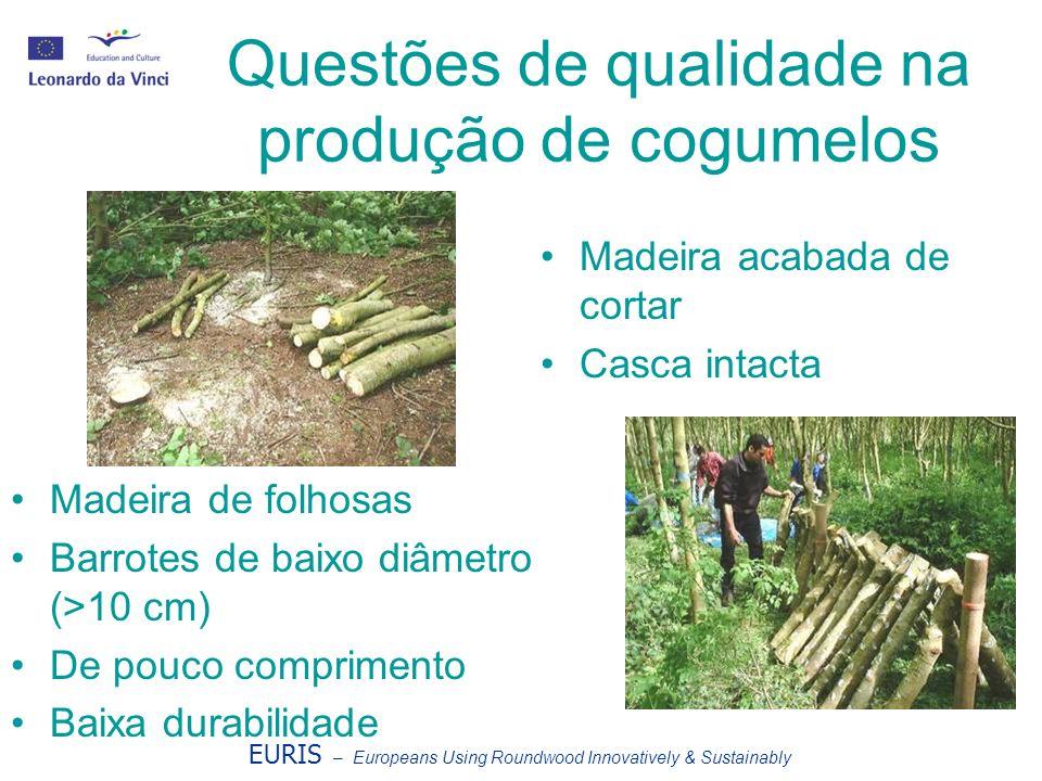 Questões de qualidade na produção de cogumelos EURIS – Europeans Using Roundwood Innovatively & Sustainably Madeira de folhosas Barrotes de baixo diâm