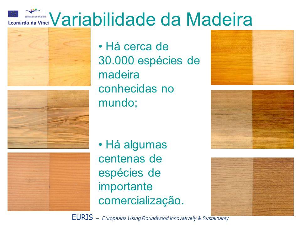 Variabilidade da Madeira Há cerca de 30.000 espécies de madeira conhecidas no mundo; Há algumas centenas de espécies de importante comercialização. EU
