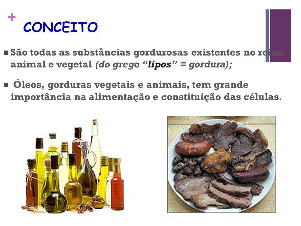 + CONCEITO São todas as substâncias gordurosas existentes no reino animal e vegetal (do grego lipos = gordura); Óleos, gorduras vegetais e animais, tem grande importância na alimentação e constituição das células.