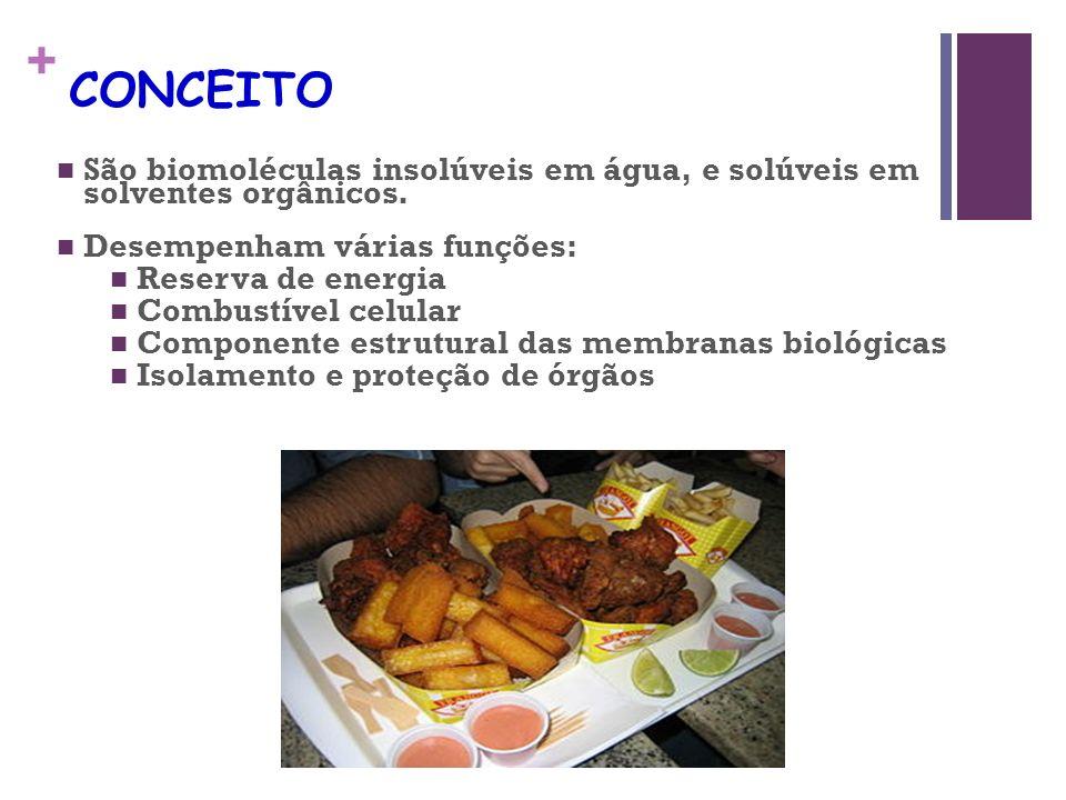 + Fosfolipídios Definição: ácidos graxos, ácido fosfórico e aminoálcool (colina, colamina e serina).