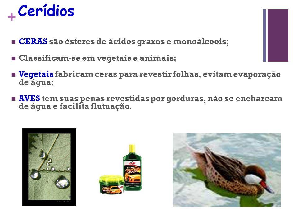 + Cerídios CERAS são ésteres de ácidos graxos e monoálcoois; Classificam-se em vegetais e animais; Vegetais fabricam ceras para revestir folhas, evitam evaporação de água; AVES tem suas penas revestidas por gorduras, não se encharcam de água e facilita flutuação.