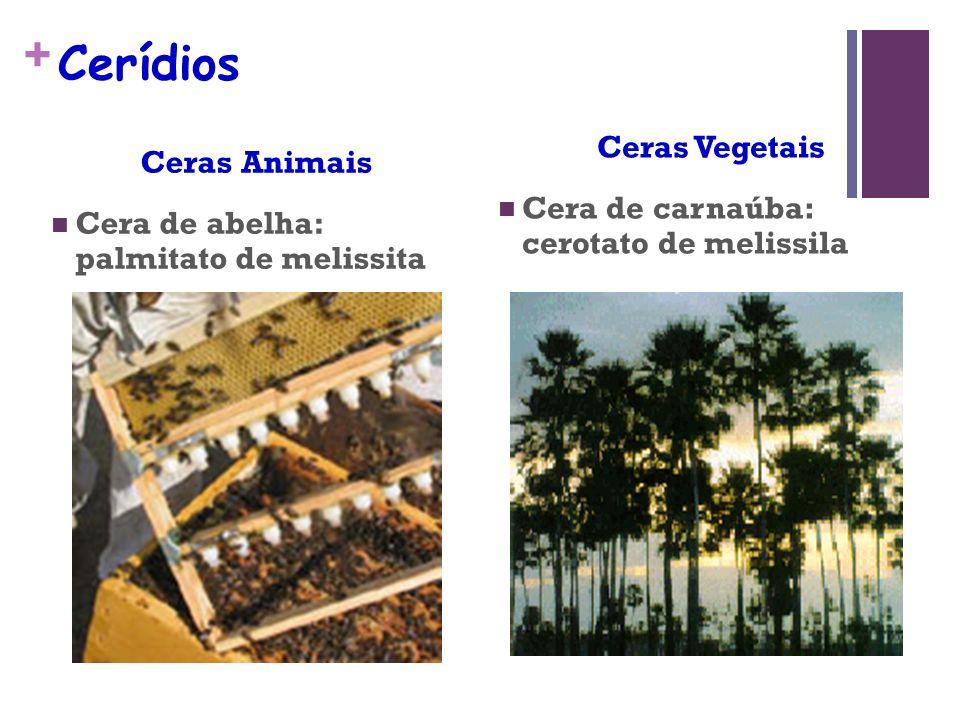 + Cerídios Ceras Animais Cera de abelha: palmitato de melissita Ceras Vegetais Cera de carnaúba: cerotato de melissila