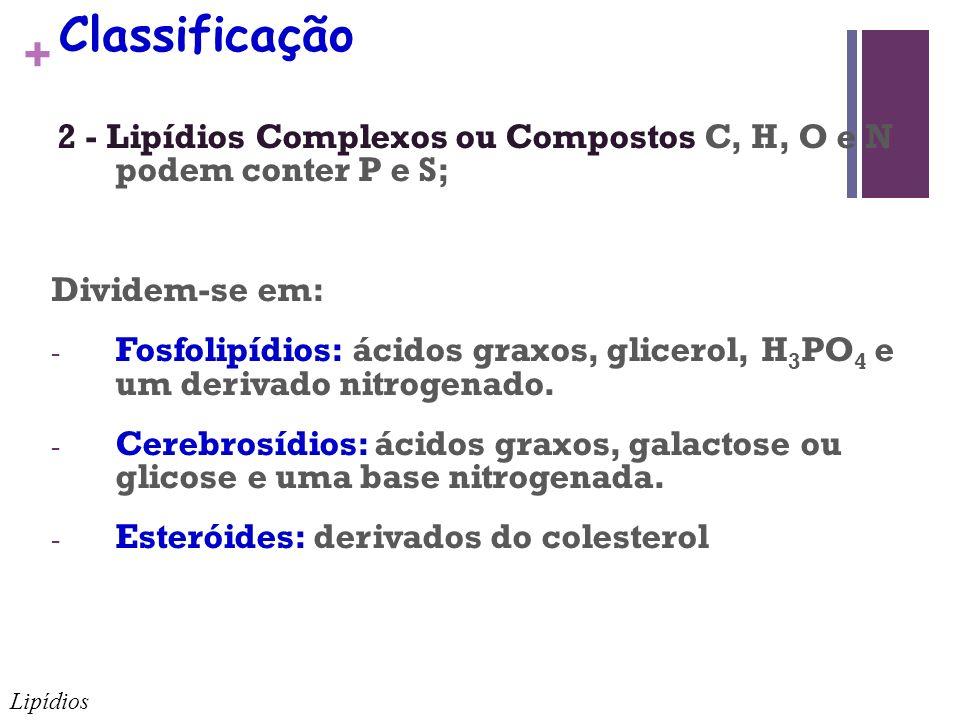 + Classificação 2 - Lipídios Complexos ou Compostos C, H, O e N podem conter P e S; Dividem-se em: - Fosfolipídios: ácidos graxos, glicerol, H 3 PO 4 e um derivado nitrogenado.
