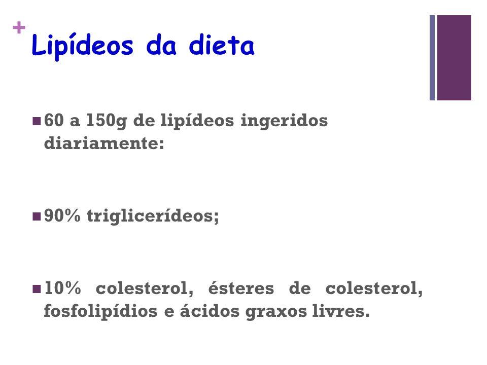 + Lipídeos da dieta 60 a 150g de lipídeos ingeridos diariamente: 90% triglicerídeos; 10% colesterol, ésteres de colesterol, fosfolipídios e ácidos graxos livres.