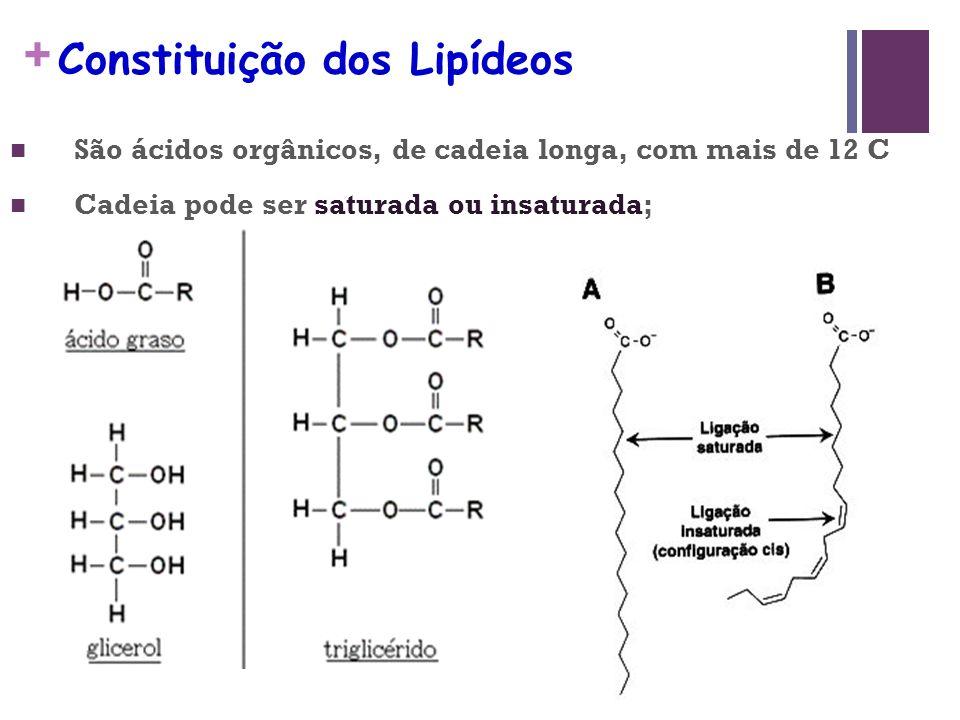 + Digestão dos lipídeos Produção de bile e metabolismo de lipídios Início: Intestino Ação: lipase pancreática