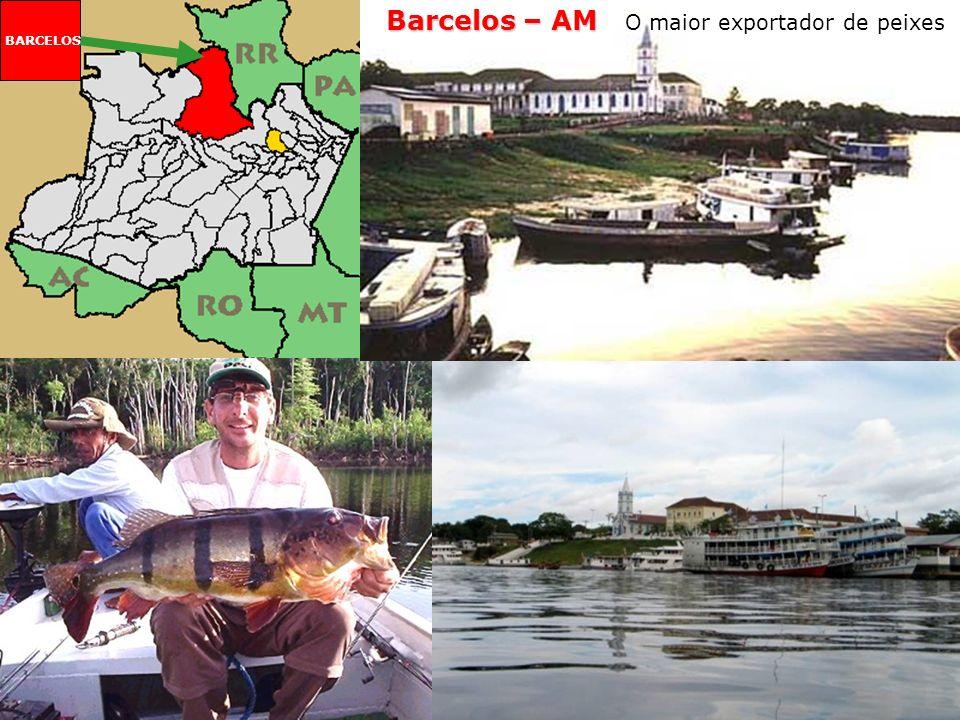 Barcelos O maior exportador de peixes Nos rios da Floresta Amazônica, vivem 2 000 espécies de peixes ornamentais. O município amazonense de Barcelos é