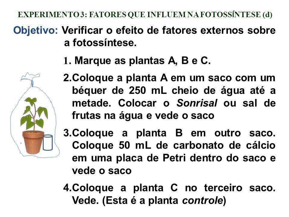 EXPERIMENTO 3: FATORES QUE INFLUEM NA FOTOSS Í NTESE (d) Objetivo: Verificar o efeito de fatores externos sobre a fotossíntese. 1. Marque as plantas A