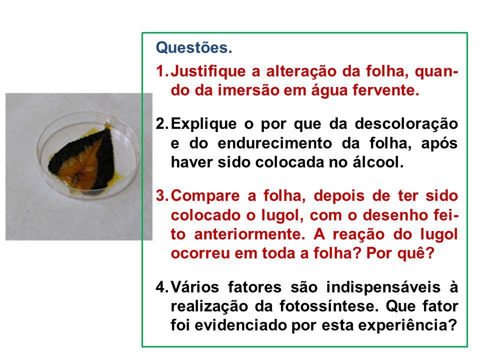 Questões. 1.Justifique a alteração da folha, quan- do da imersão em água fervente. 2.Explique o por que da descoloração e do endurecimento da folha, a