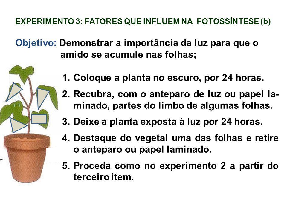 EXPERIMENTO 3: FATORES QUE INFLUEM NA FOTOSSÍNTESE (b) Objetivo: Demonstrar a importância da luz para que o amido se acumule nas folhas; 1.Coloque a p