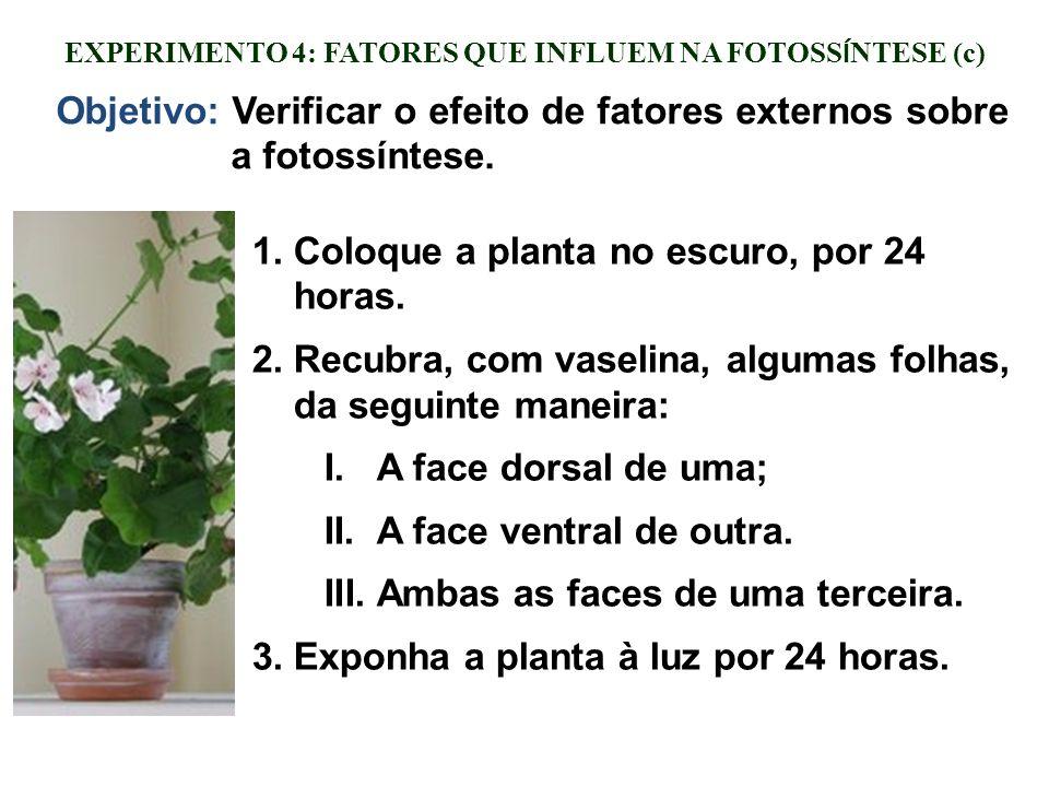 EXPERIMENTO 4: FATORES QUE INFLUEM NA FOTOSS Í NTESE (c) 1.Coloque a planta no escuro, por 24 horas. 2.Recubra, com vaselina, algumas folhas, da segui