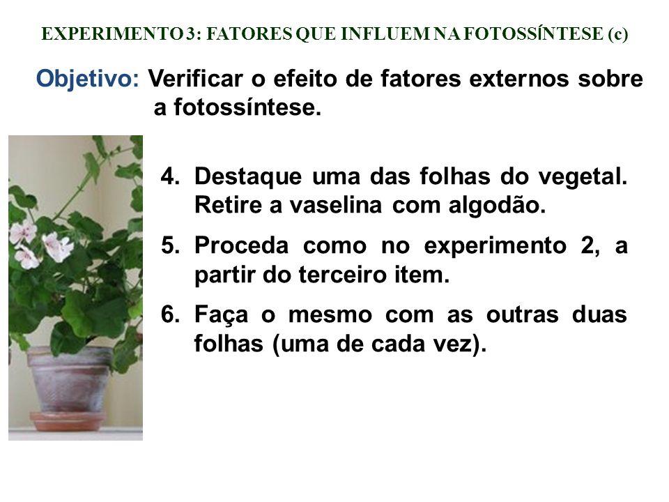 EXPERIMENTO 3: FATORES QUE INFLUEM NA FOTOSS Í NTESE (c) 4.Destaque uma das folhas do vegetal. Retire a vaselina com algodão. 5.Proceda como no experi
