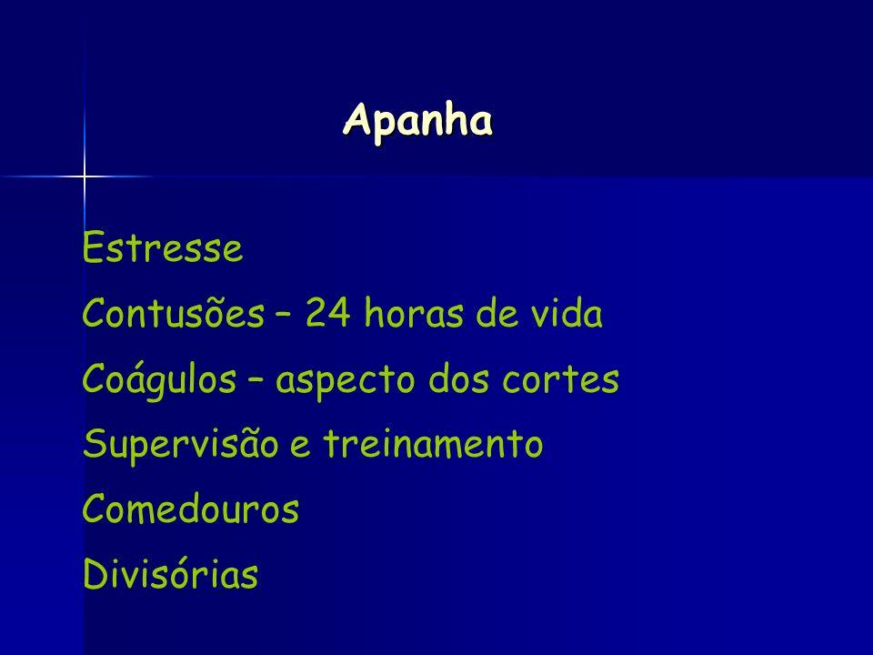 Estresse Contusões – 24 horas de vida Coágulos – aspecto dos cortes Supervisão e treinamento Comedouros Divisórias Apanha