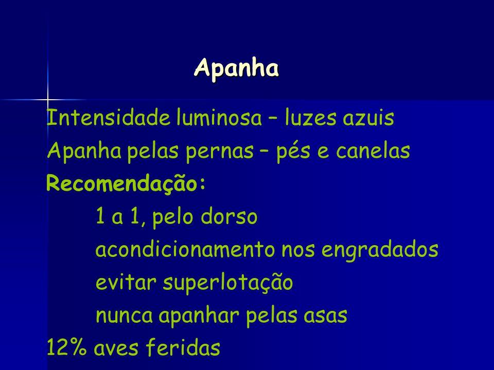 Intensidade luminosa – luzes azuis Apanha pelas pernas – pés e canelas Recomendação: 1 a 1, pelo dorso acondicionamento nos engradados evitar superlot