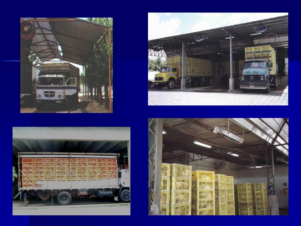 Transporte e espera Treinamento dos motoristas Manutenção do caminhão Distribuição dos engradados Carga viva e delicada Sombreamento e ventilação adequada