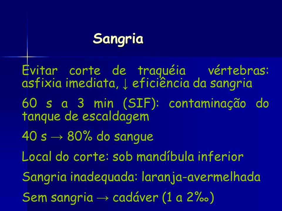 Sangria Evitar corte de traquéia vértebras: asfixia imediata, eficiência da sangria 60 s a 3 min (SIF): contaminação do tanque de escaldagem 40 s 80%