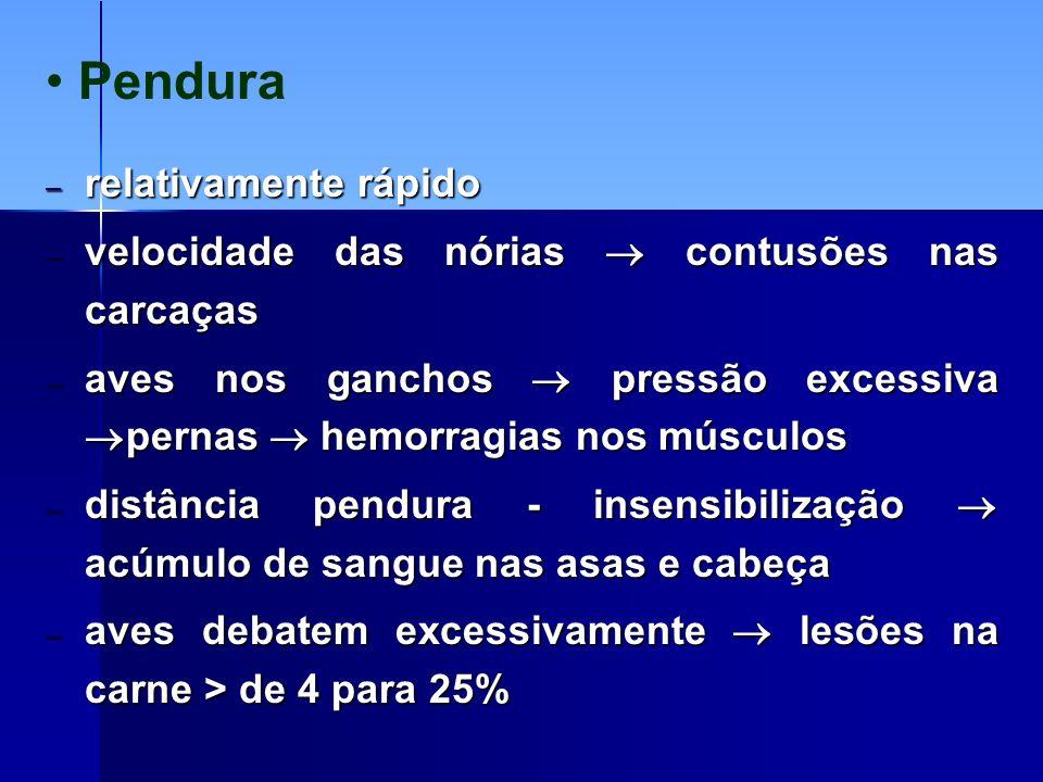 50 a 67% ocorrem antes do abatedouro Controle de qualidade: tipos e causas Contusões 100,0 Total (%) 28,323,012,4Plataforma (%) 22,826,420,0Transporte (%) 38,232,811,0Recolhimento (%) 10,717,856,6Manejo (%) ASACOXAPEITOCausas Reali,1994