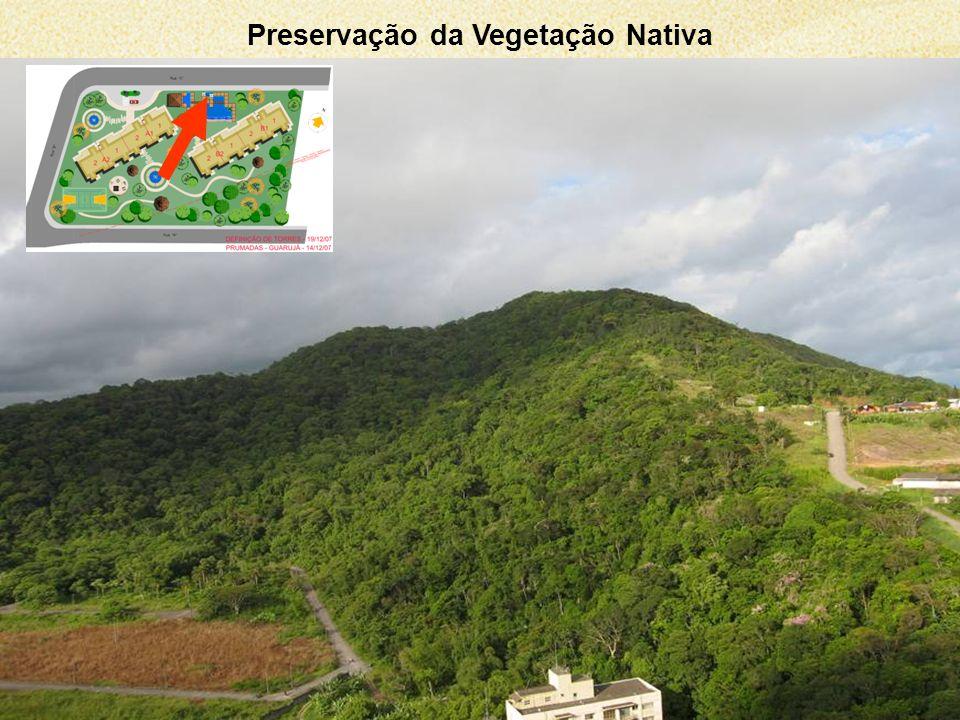 Preservação da Vegetação Nativa