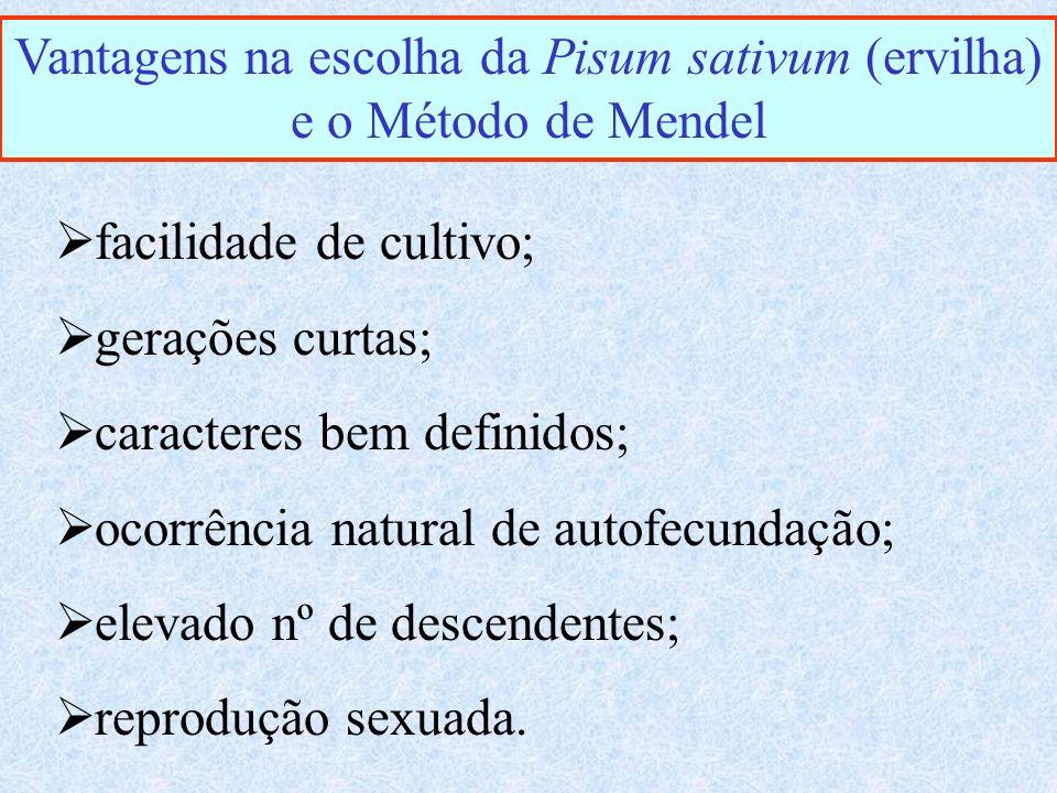 Vantagens na escolha da Pisum sativum (ervilha) e o Método de Mendel facilidade de cultivo; gerações curtas; caracteres bem definidos; ocorrência natural de autofecundação; elevado nº de descendentes; reprodução sexuada.