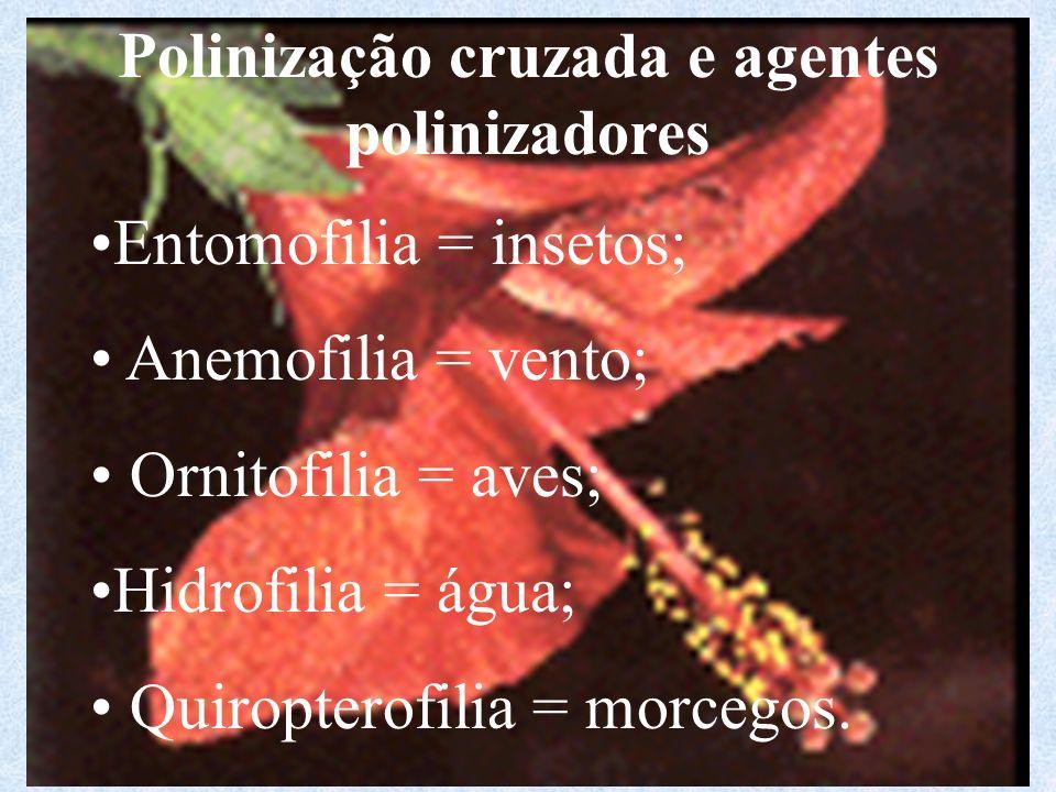 Polinização cruzada e agentes polinizadores Entomofilia = insetos; Anemofilia = vento; Ornitofilia = aves; Hidrofilia = água; Quiropterofilia = morcegos.
