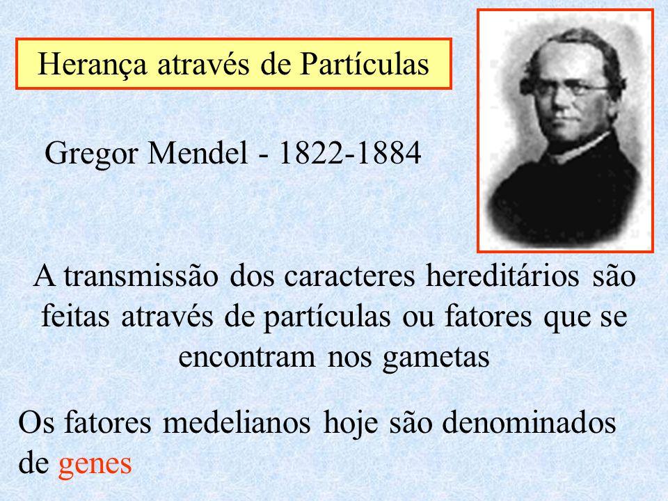 Herança através de Partículas Gregor Mendel - 1822-1884 A transmissão dos caracteres hereditários são feitas através de partículas ou fatores que se e