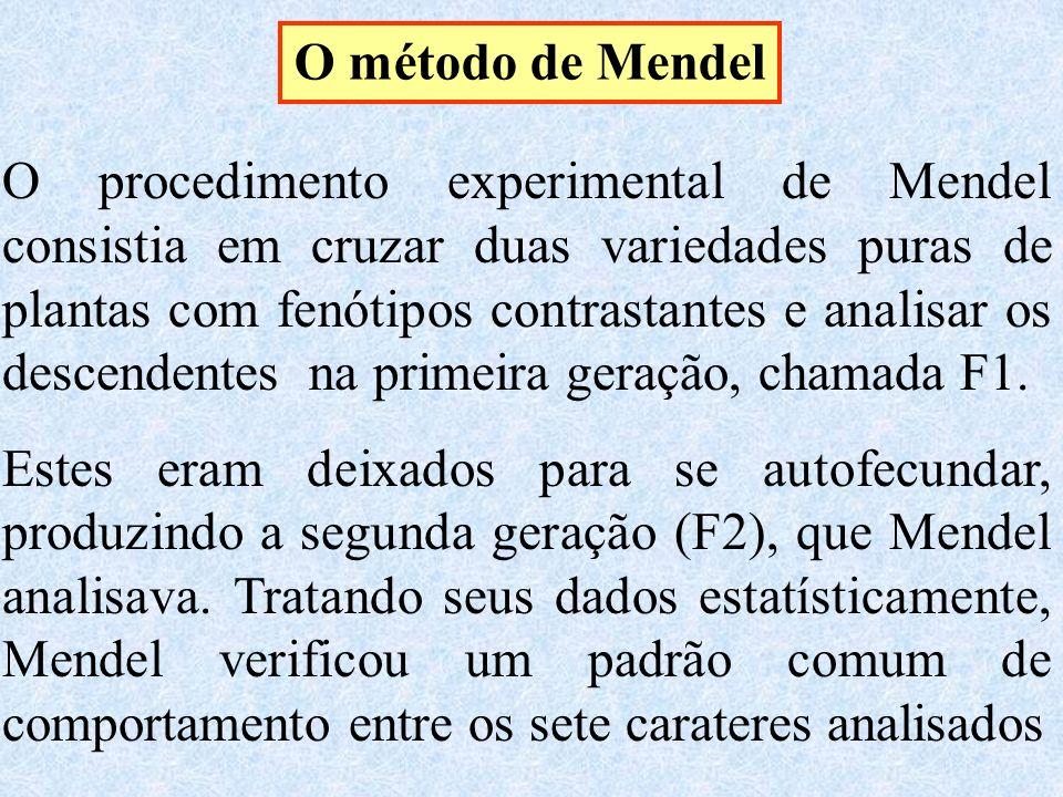 O método de Mendel O procedimento experimental de Mendel consistia em cruzar duas variedades puras de plantas com fenótipos contrastantes e analisar os descendentes na primeira geração, chamada F1.