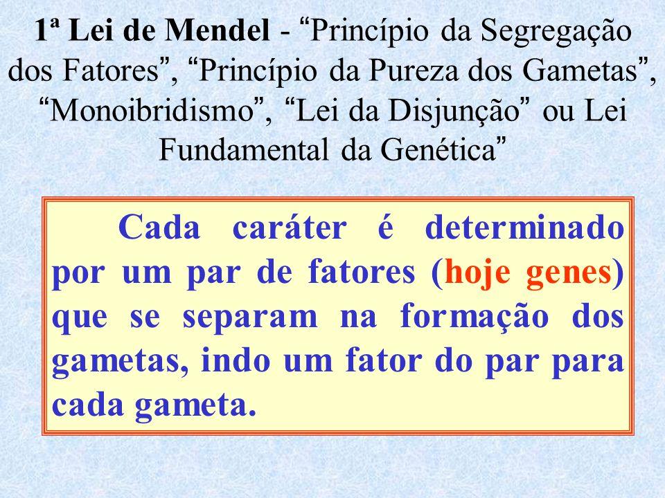 1ª Lei de Mendel - Princípio da Segregação dos Fatores, Princípio da Pureza dos Gametas, Monoibridismo, Lei da Disjunção ou Lei Fundamental da Genética Cada caráter é determinado por um par de fatores (hoje genes) que se separam na formação dos gametas, indo um fator do par para cada gameta.