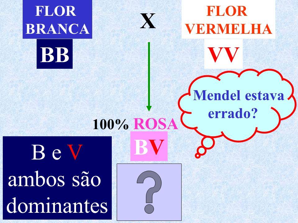 FLOR BRANCA FLOR VERMELHA X 100% ROSA Mendel estava errado? BBVV BVBV B e V ambos são dominantes